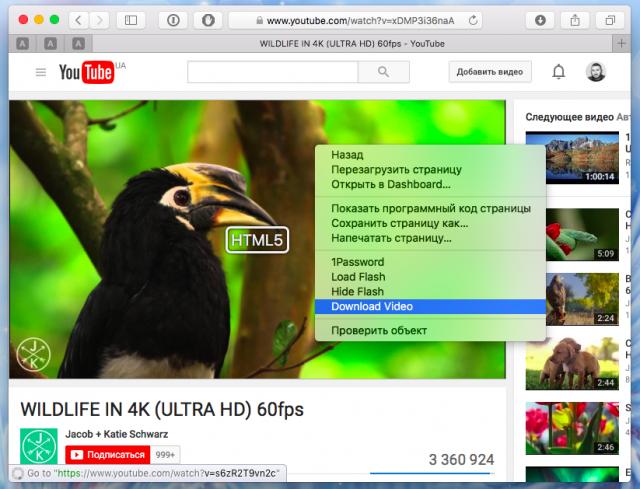 Расширение ClickToPlugin позволяет скачать любое видео с ютуб канала.
